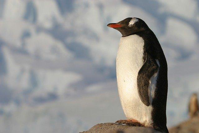 antartica-3427135_640.jpg