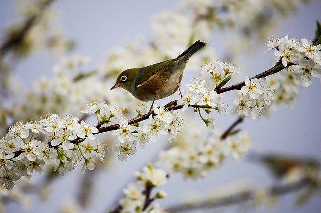 blossom-1324088_640.jpg