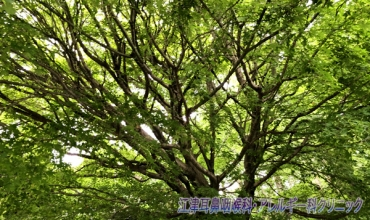 tree_20200725210743194.jpg
