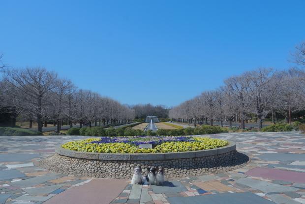 昭和記念公園 ガラガラ00083979