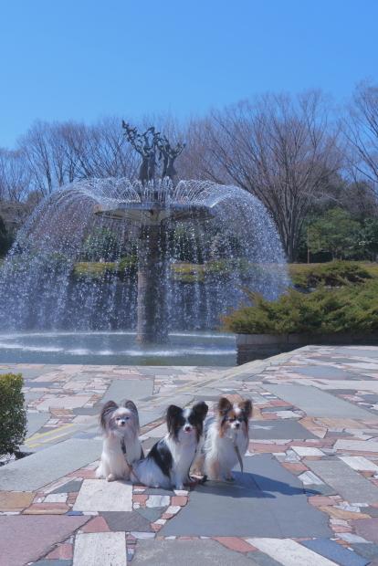 昭和記念公園 ガラガラ00083983