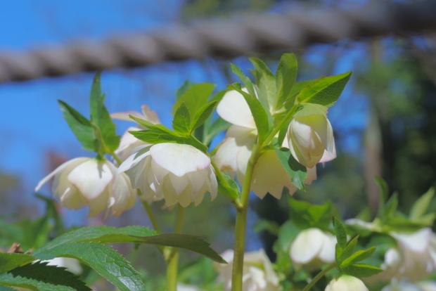 昭和記念公園 ガラガラ00083985