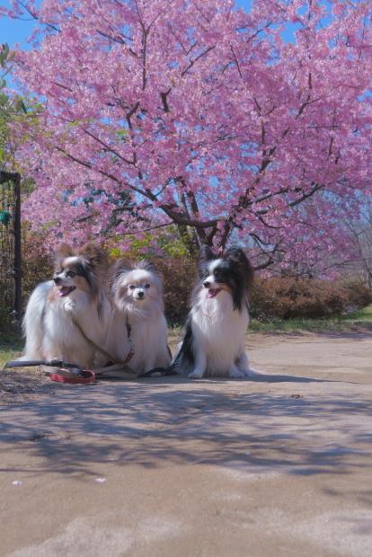 昭和記念公園 ガラガラ00083987