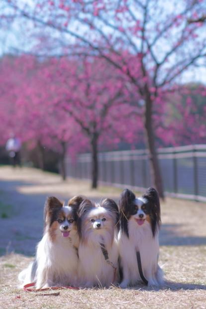 昭和記念公園 ガラガラ00084023