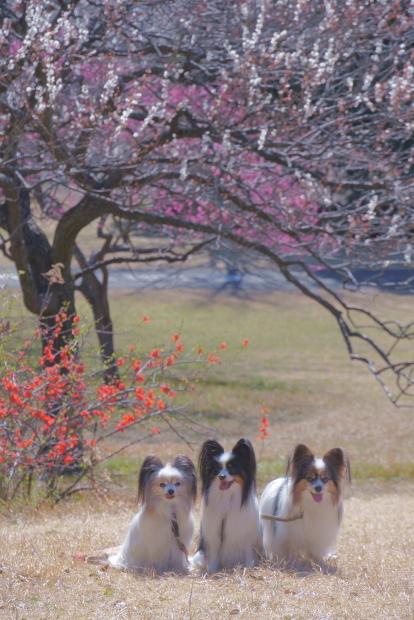 昭和記念公園 ガラガラ00083988