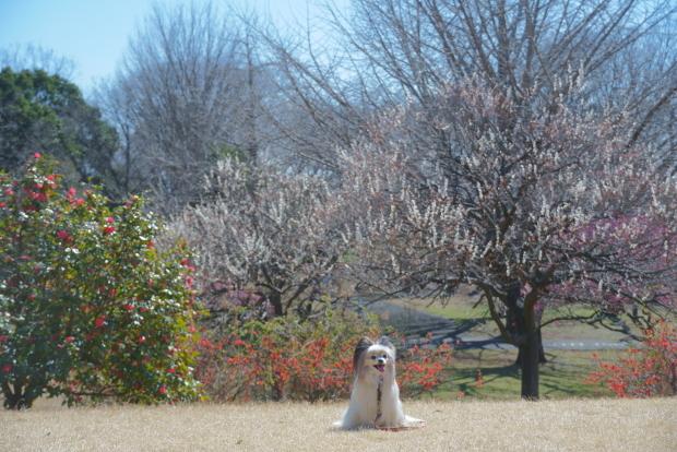 昭和記念公園 ガラガラ00083991