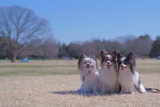 昭和記念公園 ガラガラ00084020