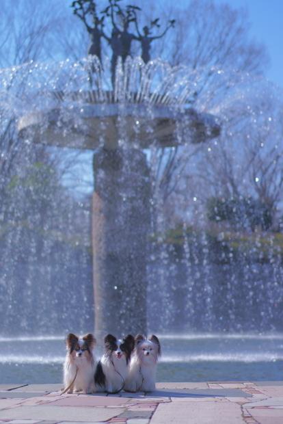 昭和記念公園 ガラガラ00084025