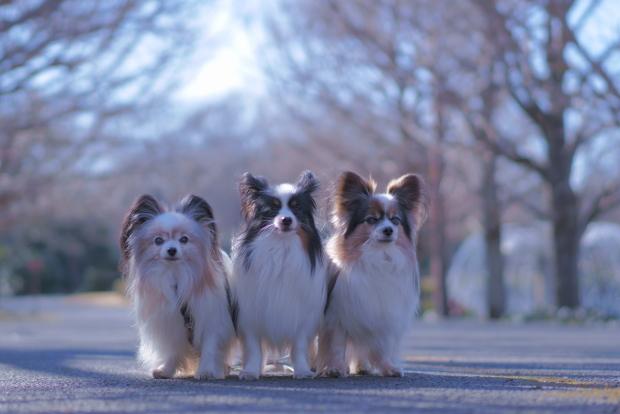 昭和記念公園 ガラガラ00084029