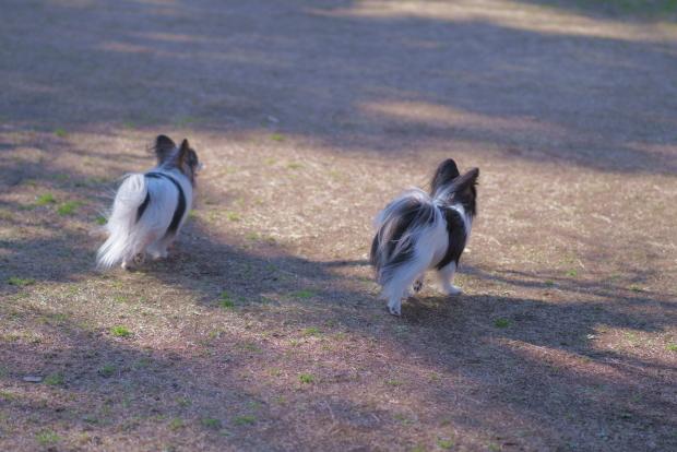 昭和記念公園 ガラガラ00084032