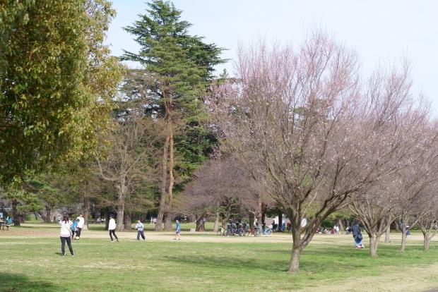 野川公園 歩くだけの散歩00084097