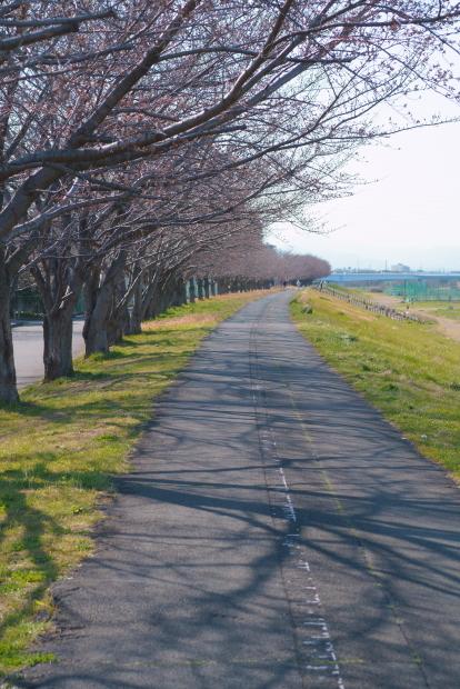 稲城北緑地公園00084131