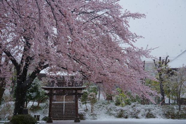 3月の雪202000084350