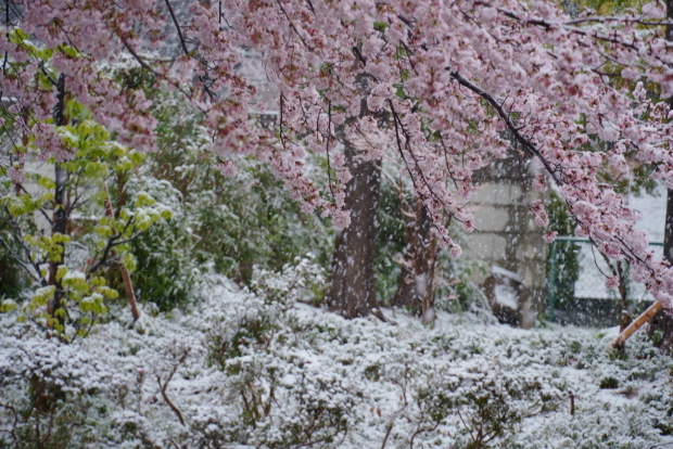 3月の雪202000084354