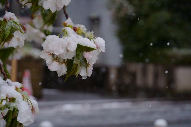 3月の雪202000084373