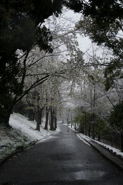 3月の雪202000084374