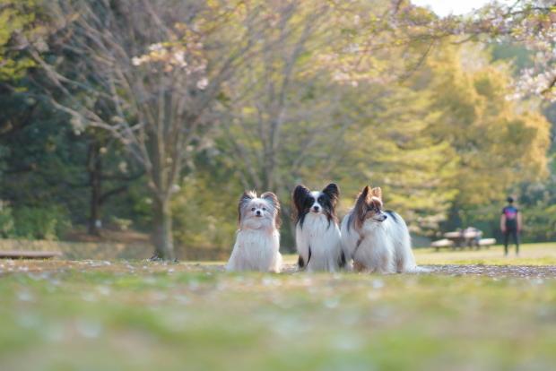 桜が散ったふるさと公園00084617