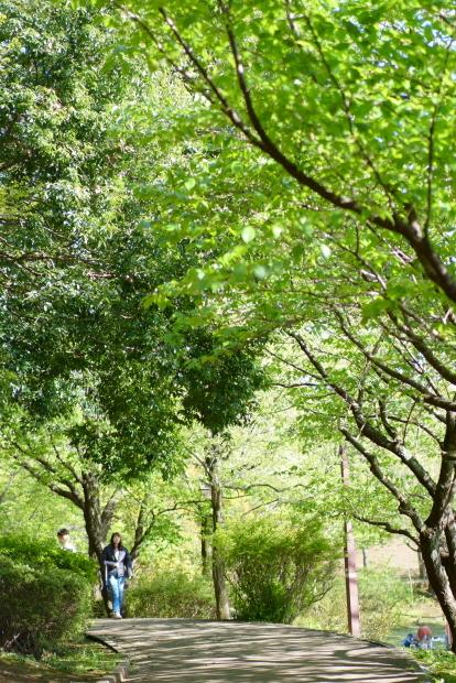 新緑のふるさと公園00084736