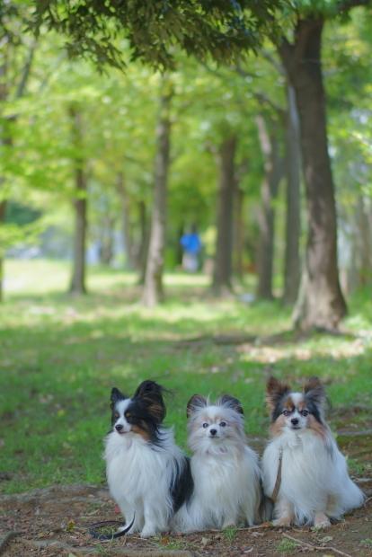 新緑のお散歩00084767