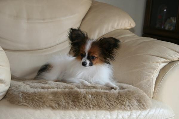 犬達5月3日 ブログサイズラック うちの子記念日2