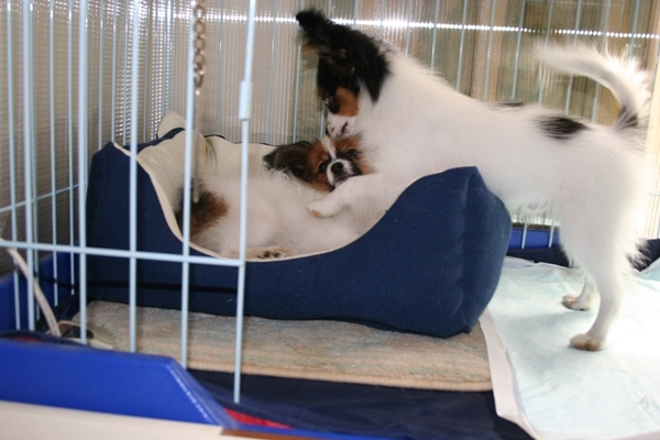 犬達5月3日 ブログサイズIMG_1598