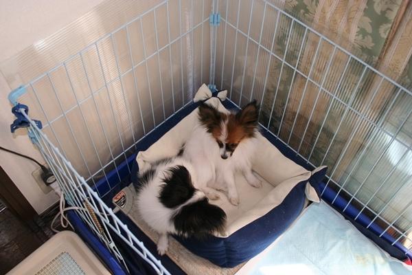 犬達5月3日 ブログサイズIMG_1602