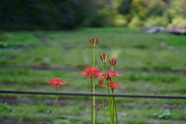 秋の里山ガーデン00085650