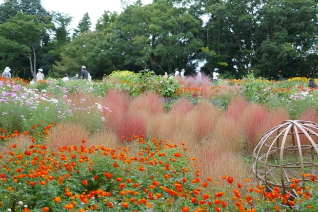 秋の里山ガーデン00086499