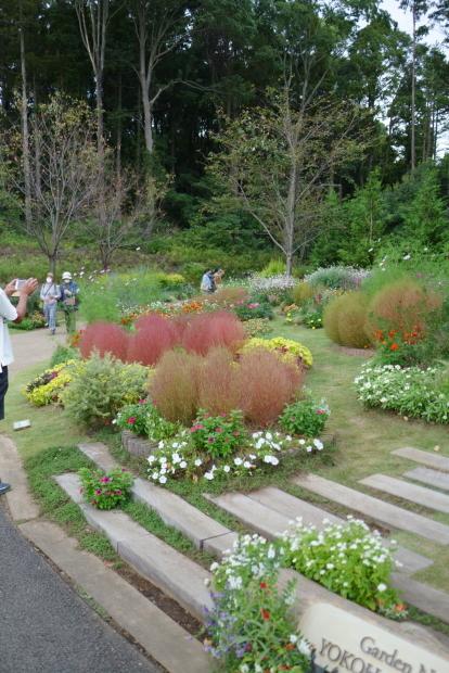 秋の里山ガーデン00086494