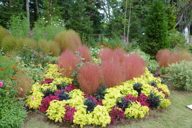 秋の里山ガーデン00086495