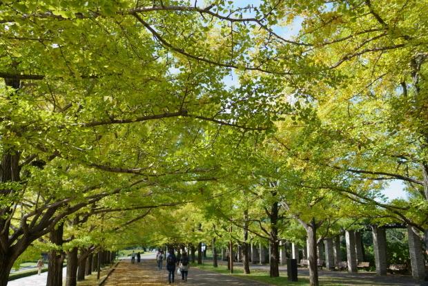 昭和記念公園コスモス202000086151