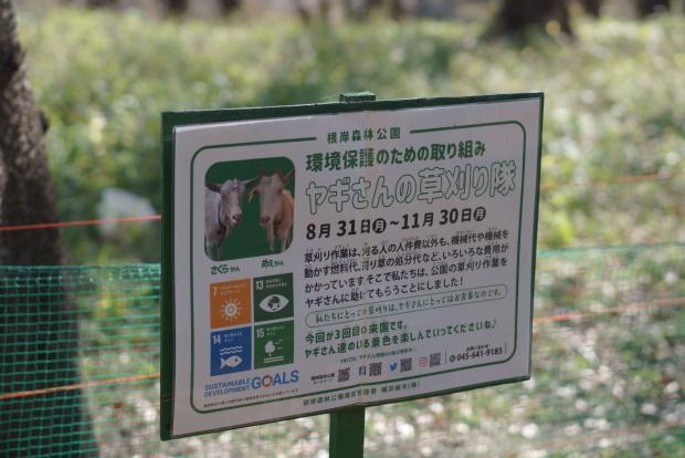 根岸森林公園ブログサイズ00086693