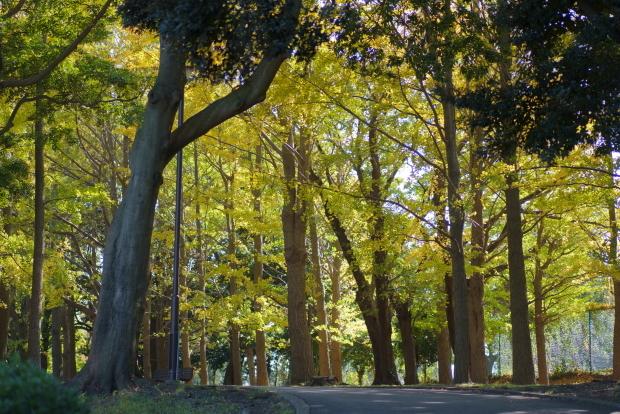 根岸森林公園ブログサイズ00086695