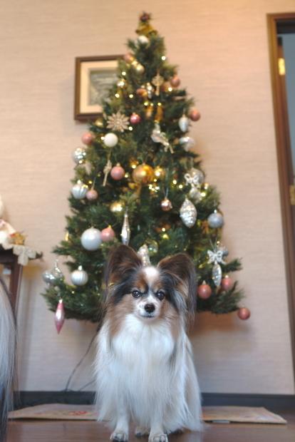 クリスマスツリー 202000085782