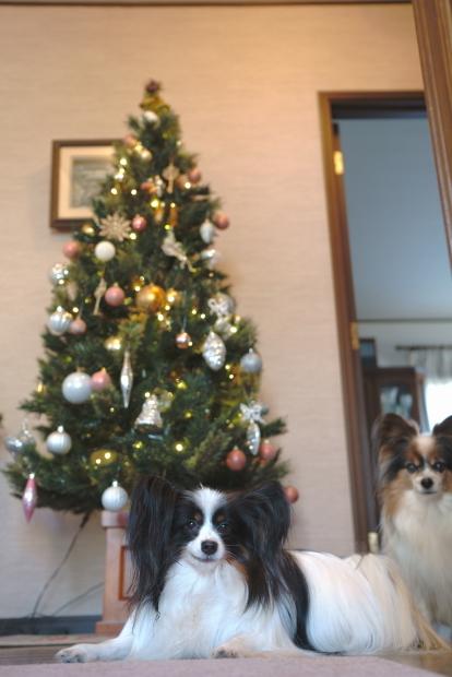 クリスマスツリー 202000085780