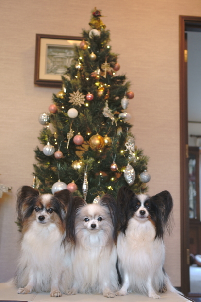 クリスマスツリー 202000085786