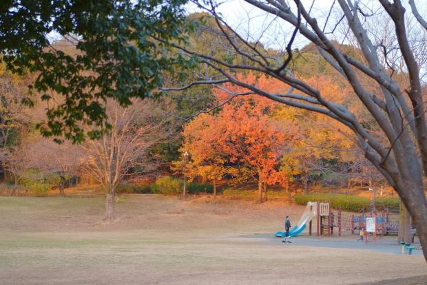 ふるさと公園紅葉終わり00086852