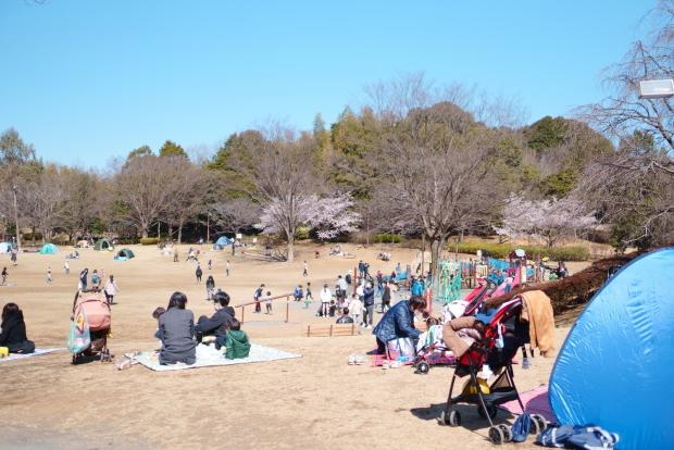 ふるさと公園玉縄桜00087987