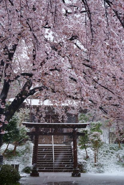 3月の雪202000084355