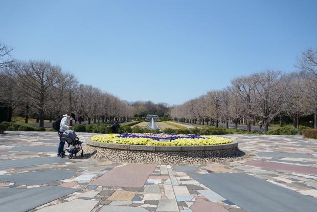 昭和記念公園の桜00084223