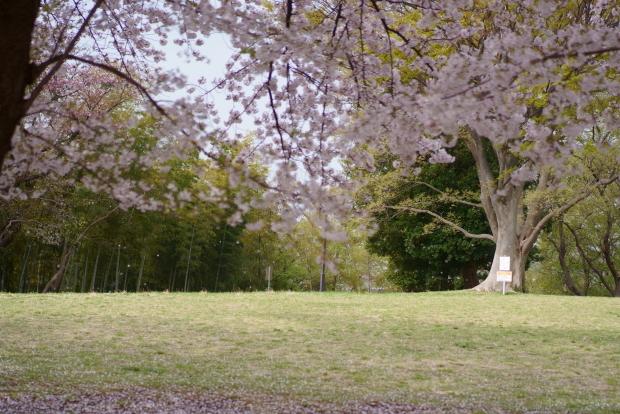 エルの桜202100088242
