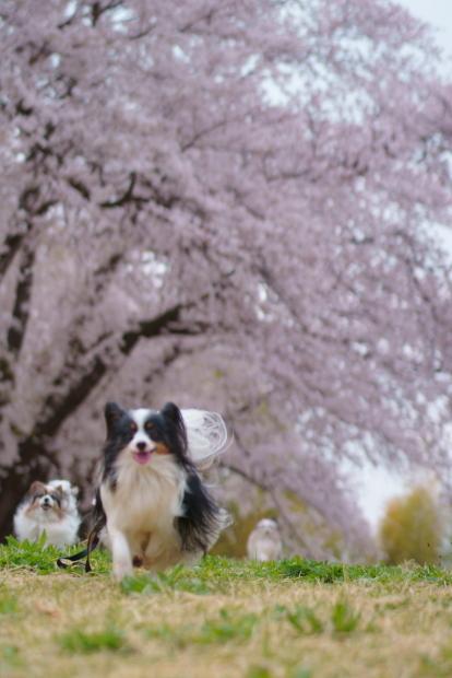 エルの桜202100088244