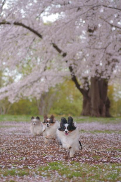 エルの桜202100088300