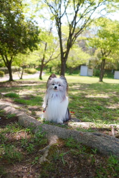 四季の森公園 保木公園00088597