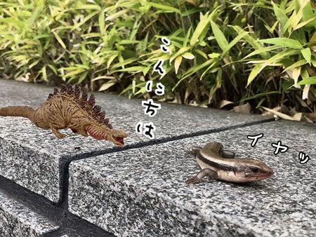 カナヘビ4