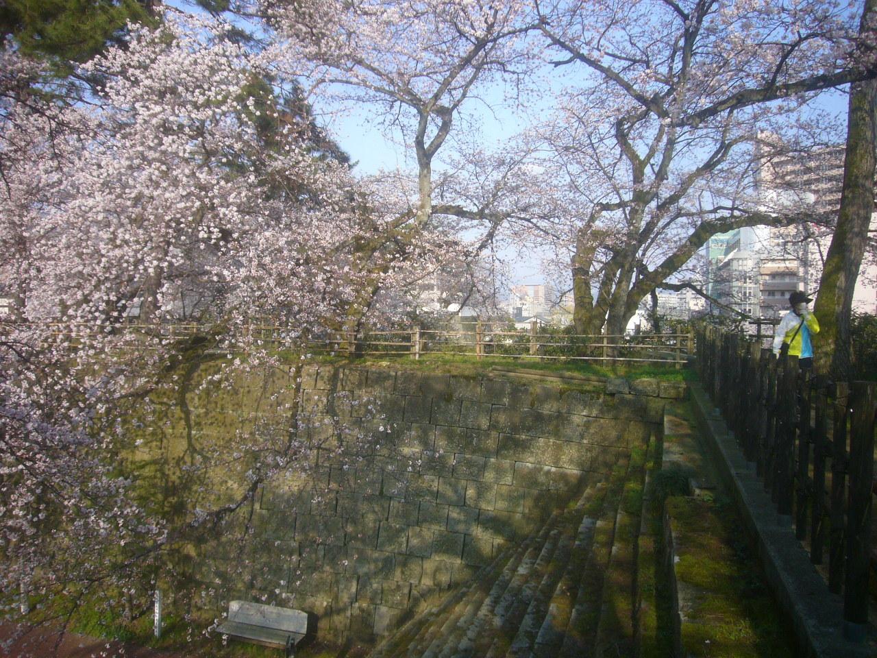 福井城址 桜 R3.2.26