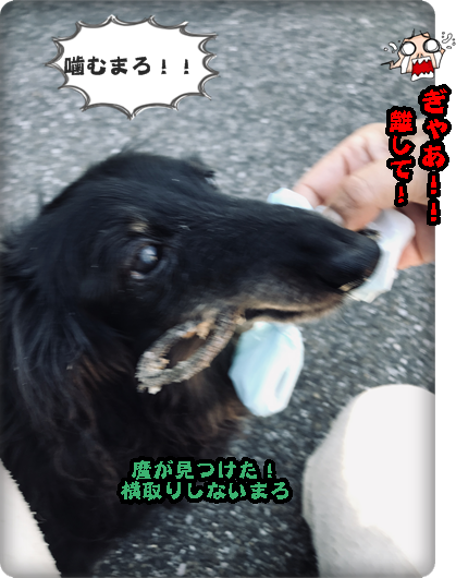 こく麿 49日IMG_0793
