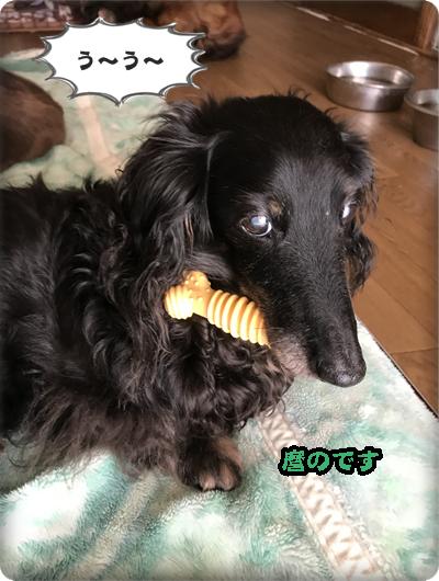 こく麿 49日IMG_7220(1)-1
