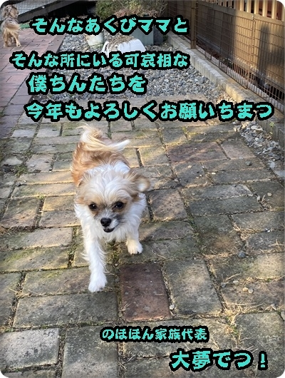 大夢2020年aIMG_5996