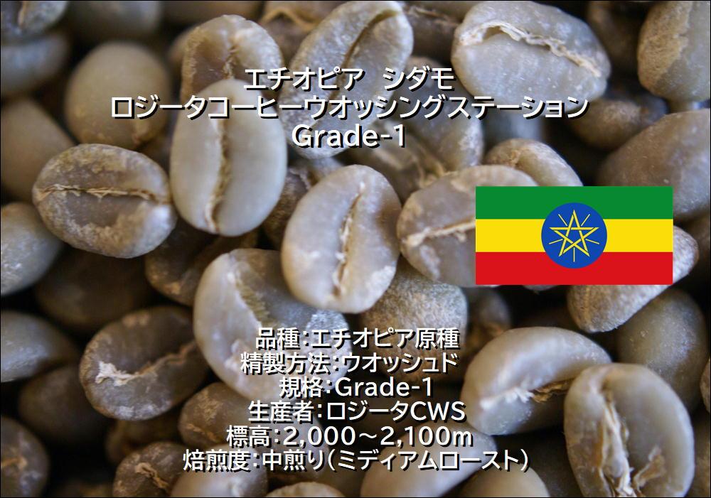 エチオピア ロジータG1 生豆